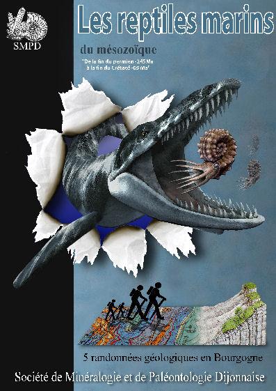 Reptiles marins C1