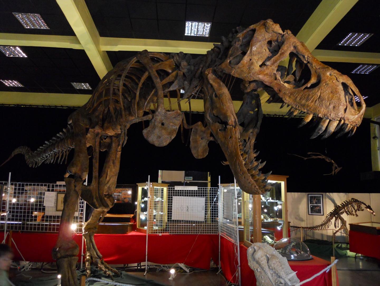 Le T-rex!