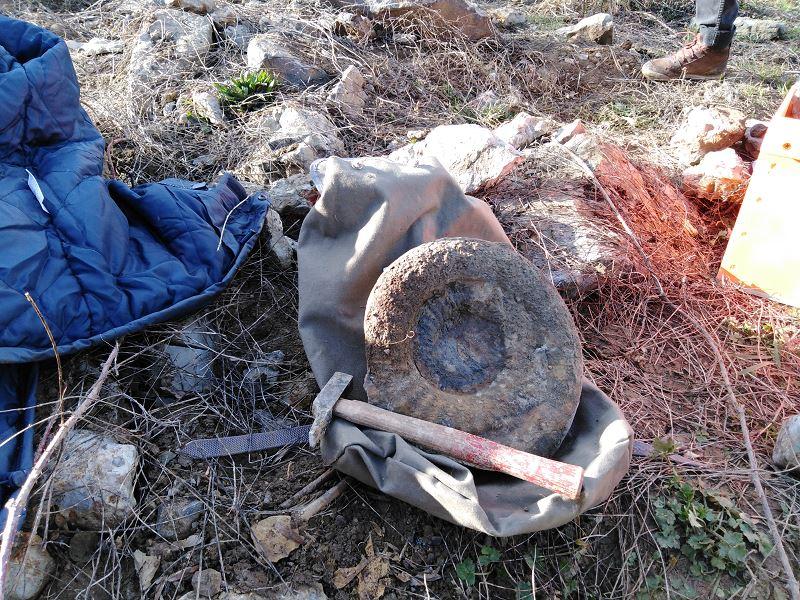 Ammonite du Sinémurien à identifier