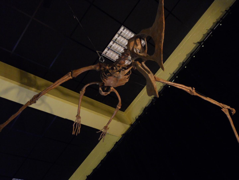Ptérosaure suspendu...