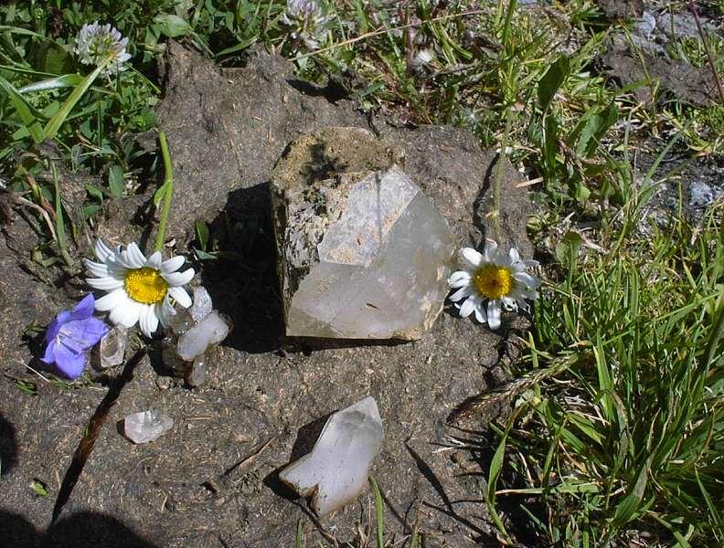 Des quartz sur une bouse de vache sechée, pour le contraste