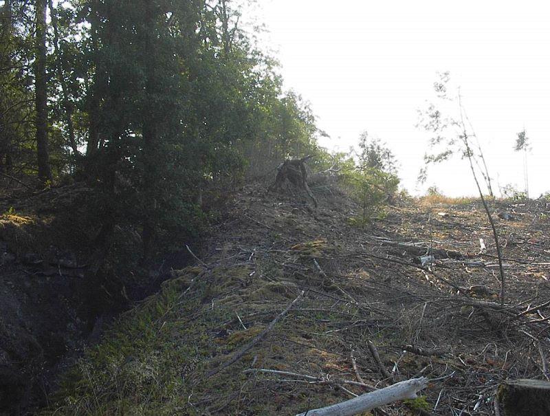 Le filon est au milieu des bois