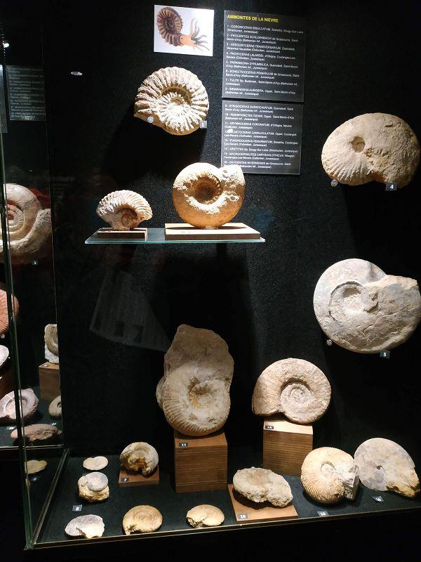 Des ammonites de la région et d'ailleurs