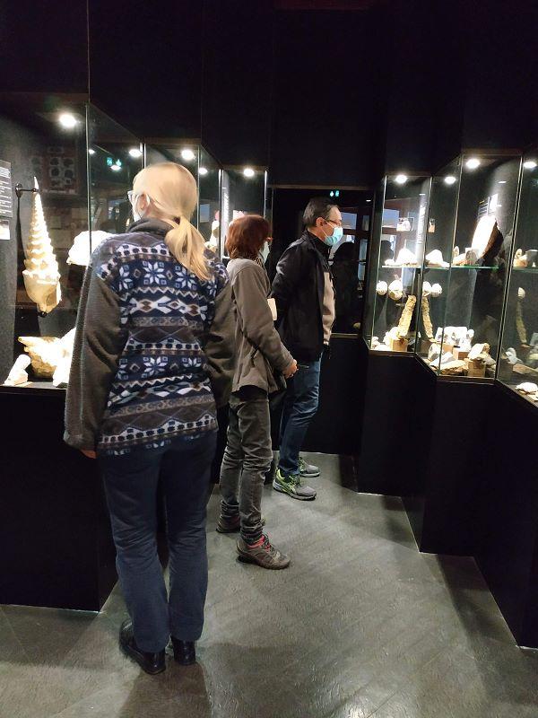 Belle muséographie pour l'exposition de fossiles
